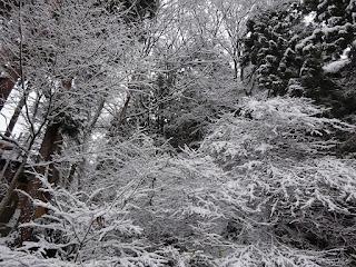 野沢温泉の雪景色