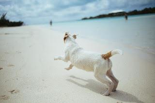 Un chien s'amusant sur la plage