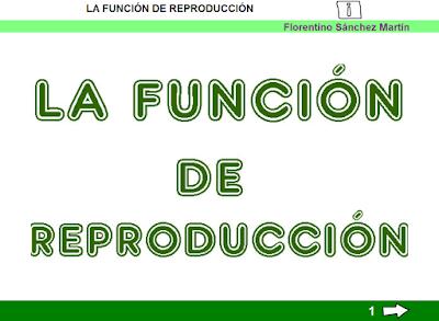 http://ceiploreto.es/sugerencias/cplosangeles.juntaextremadura.net/web/curso_3/naturales_3/reproduccion_3/reproduccion_3.html