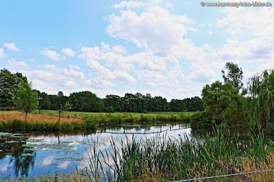 Blick über den Teich zur Viehweide