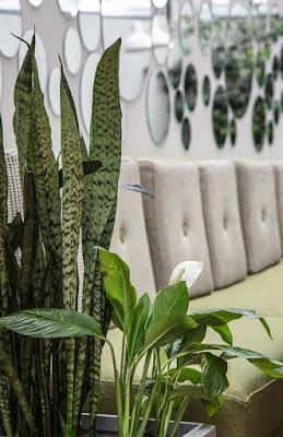 Rośliny- dżungla