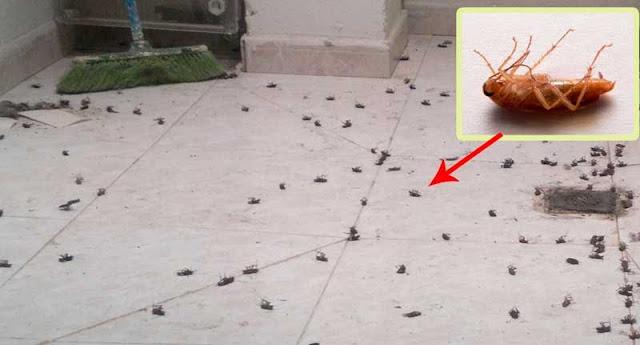 Esta es la forma m s efectiva de eliminar todas las for Como eliminar cucarachas pequenas en casa