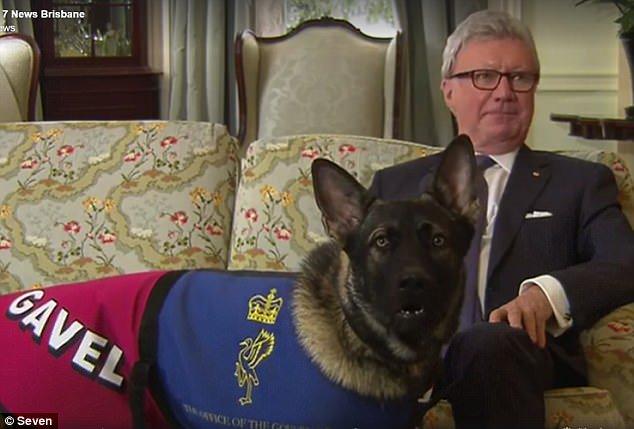 Despiden a perro policía; ya no quisieron renovarle contrato por ser demasiado amistoso