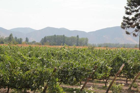 Como visitar a Vinícola Undurraga em Santiago do Chile