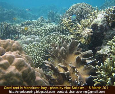 Coral reef in Dore bay of Manokwari