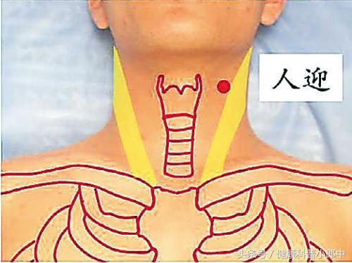 敲打人迎穴。防治高血壓、增強肺功能 - 穴道經絡引導
