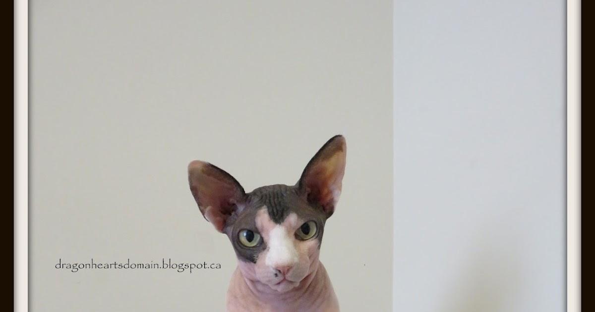 Sphynx Cat Rescue Orange County Ca