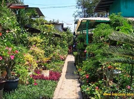 pasar bunga kayoon surabaya