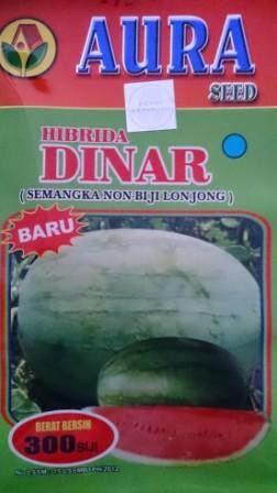 buah besar, daging merah, buah bulat, semangka non biji, Dinar,  Non Biji Dinar, semangka Dinar, Buah Lonjong, Buah Oval, Aura Seed