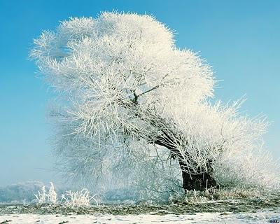arbol-con-las-ramas-cubiertas-de-hielo