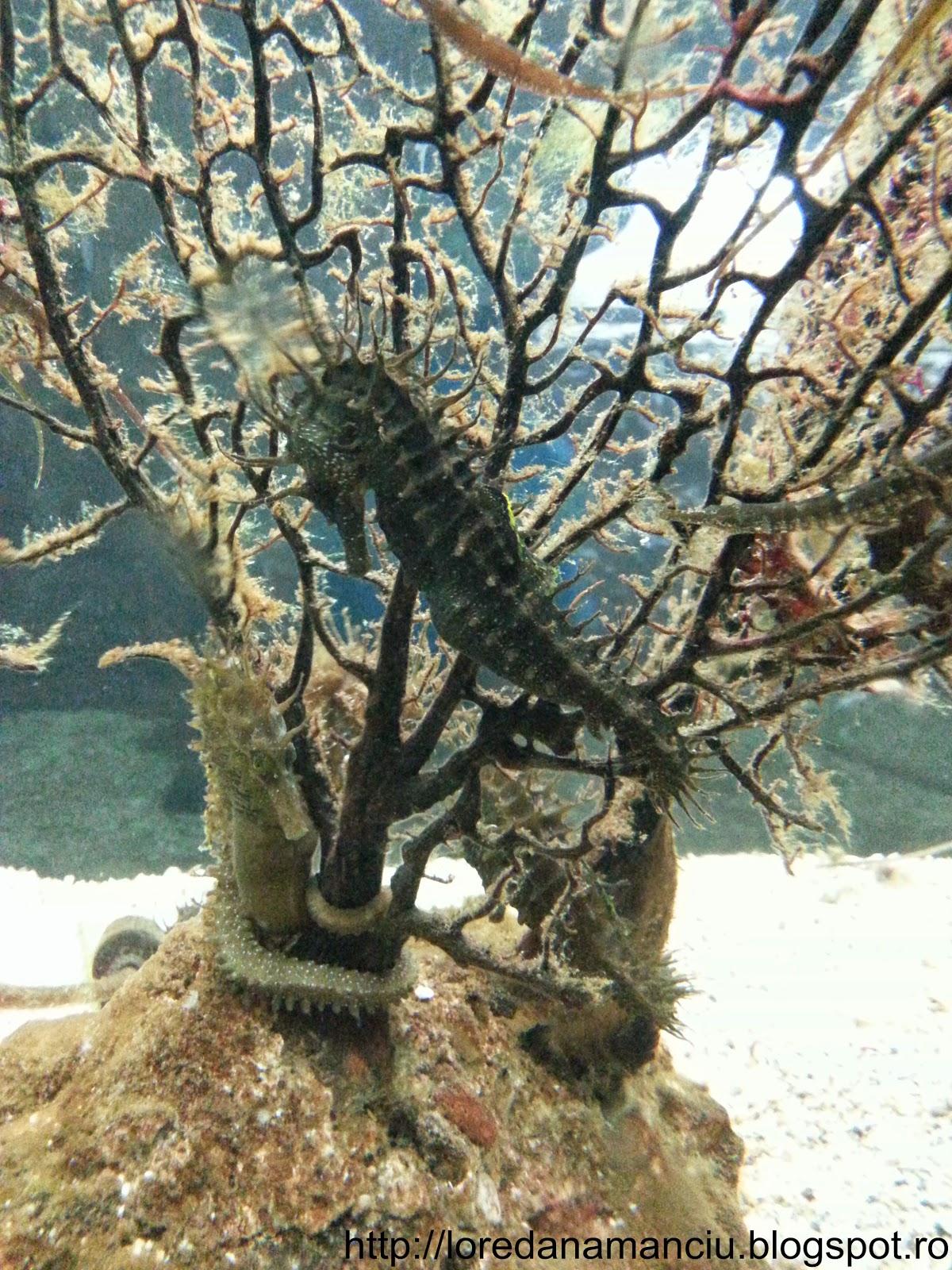 Aquarium from Croatia, Pola