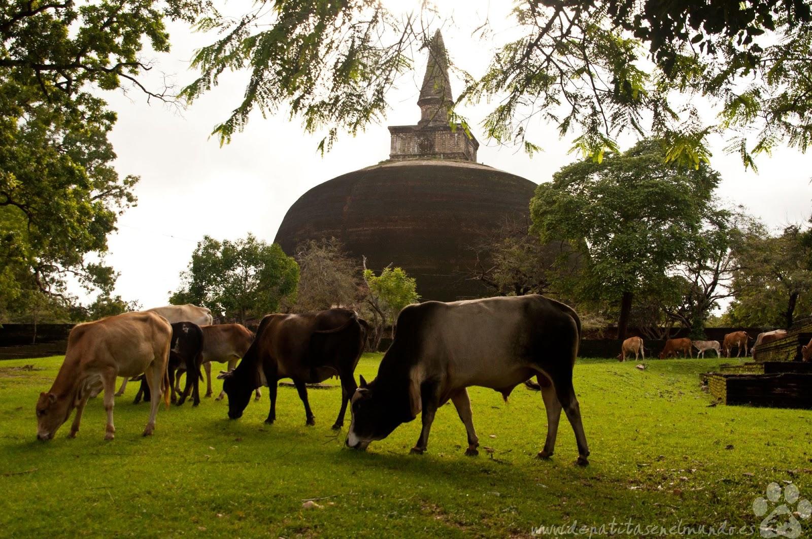 Rankot Vihara en Polonnaruwa