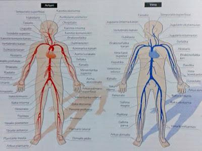 Gambar Anatomi Fisiologi Perpindahan Cairan Tubuh
