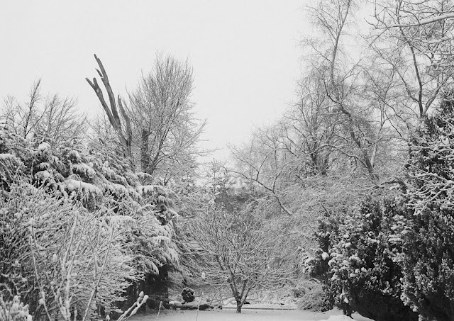 Snow views from the back garden at home