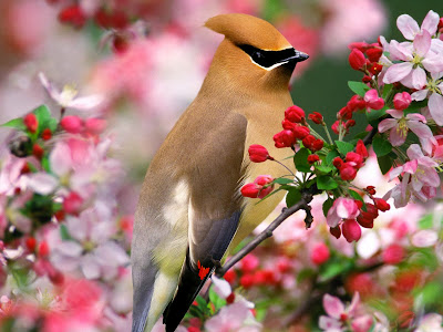Nice-birds-wallpapers