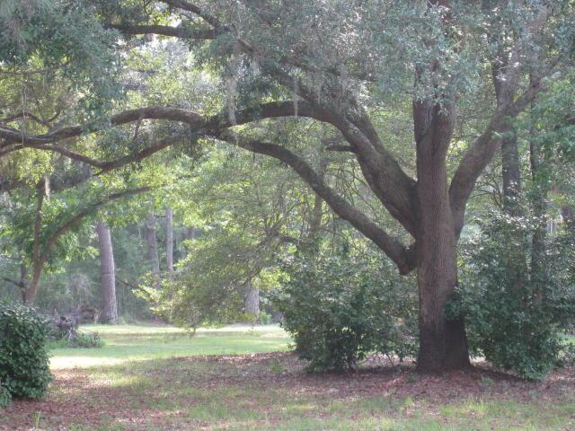 Huffines Company Selling South Carolina Plantation Real