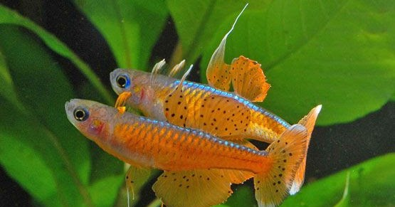 Female flowerhorn for sale in bangalore dating 6