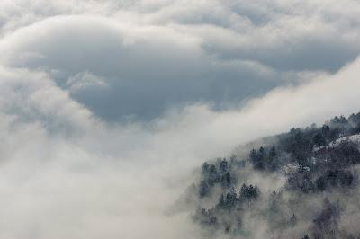 tél, versek, Kányádi Sándor, vers-szombat, téli fák, Télifák, fenyőerdő