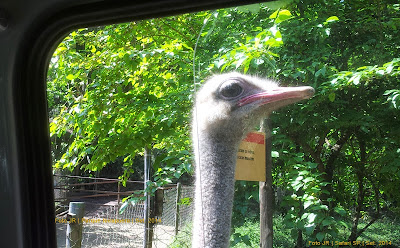 Visita ao Simba Safari | SP | Avestruz