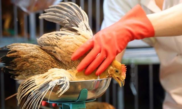 Γρίπη των πτηνών: Έξαρση στην Ευρώπη – Συναγερμός στην Ελλάδα – Δείτε τα συμπτώματα