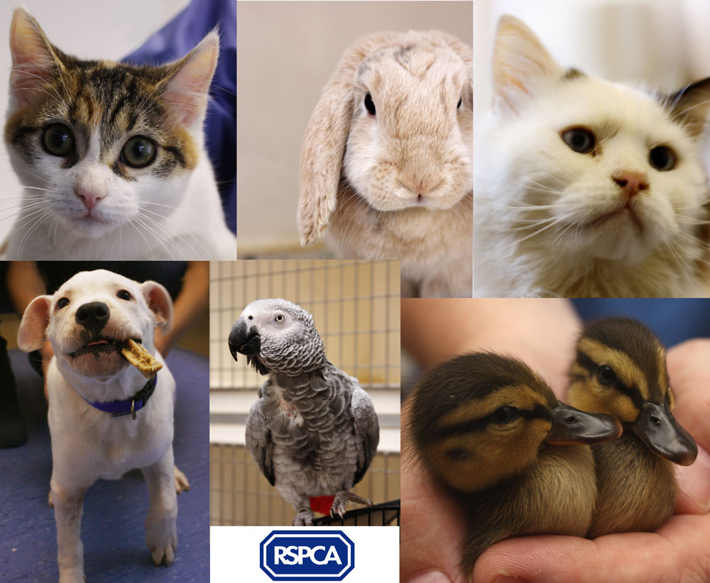 How to work for the rspca