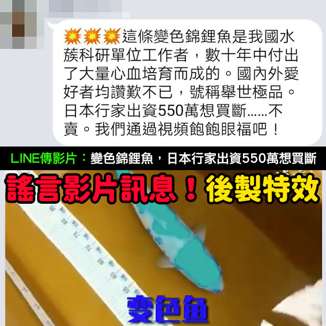 變色魚 影片 謠言 後製 變色錦鋰魚 日本行家出資550萬想買斷