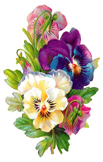 pansy flower wildflower digital clipart botanical art illustration image