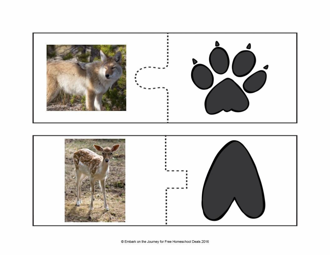 نصائح تربوية بطاقات تعليم الأطفال أشكال اقدام بعض الحيوانات نصائح تربوية