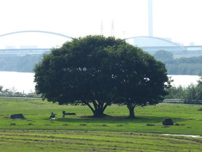 淀川河川公園 佐太西地区