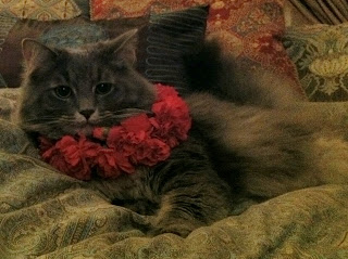 Ceclia Cat with a Collar of Carnations - Stein Your Florist Co.