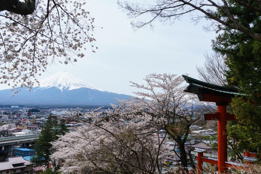 桜満開の新倉富士浅間神社&新倉山浅間公園へ|山と社寺、そして、富士山