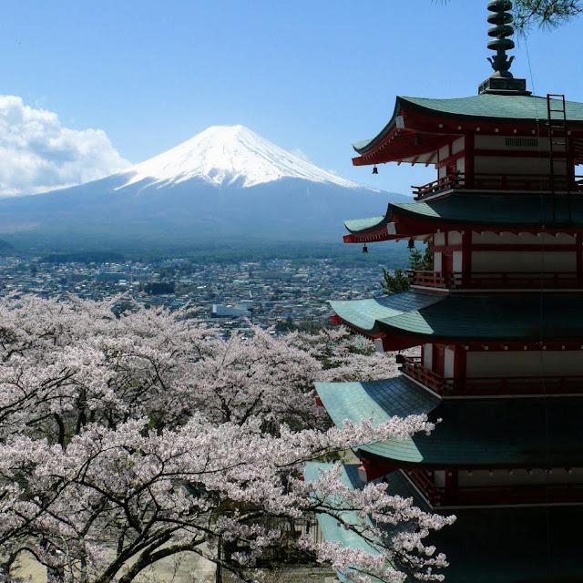 新倉山浅間公園 五重塔 富士山 桜