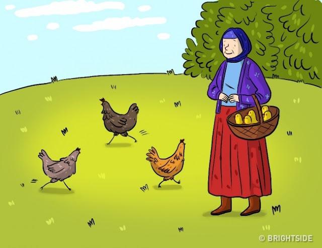 Κοτόπουλα και αυγά