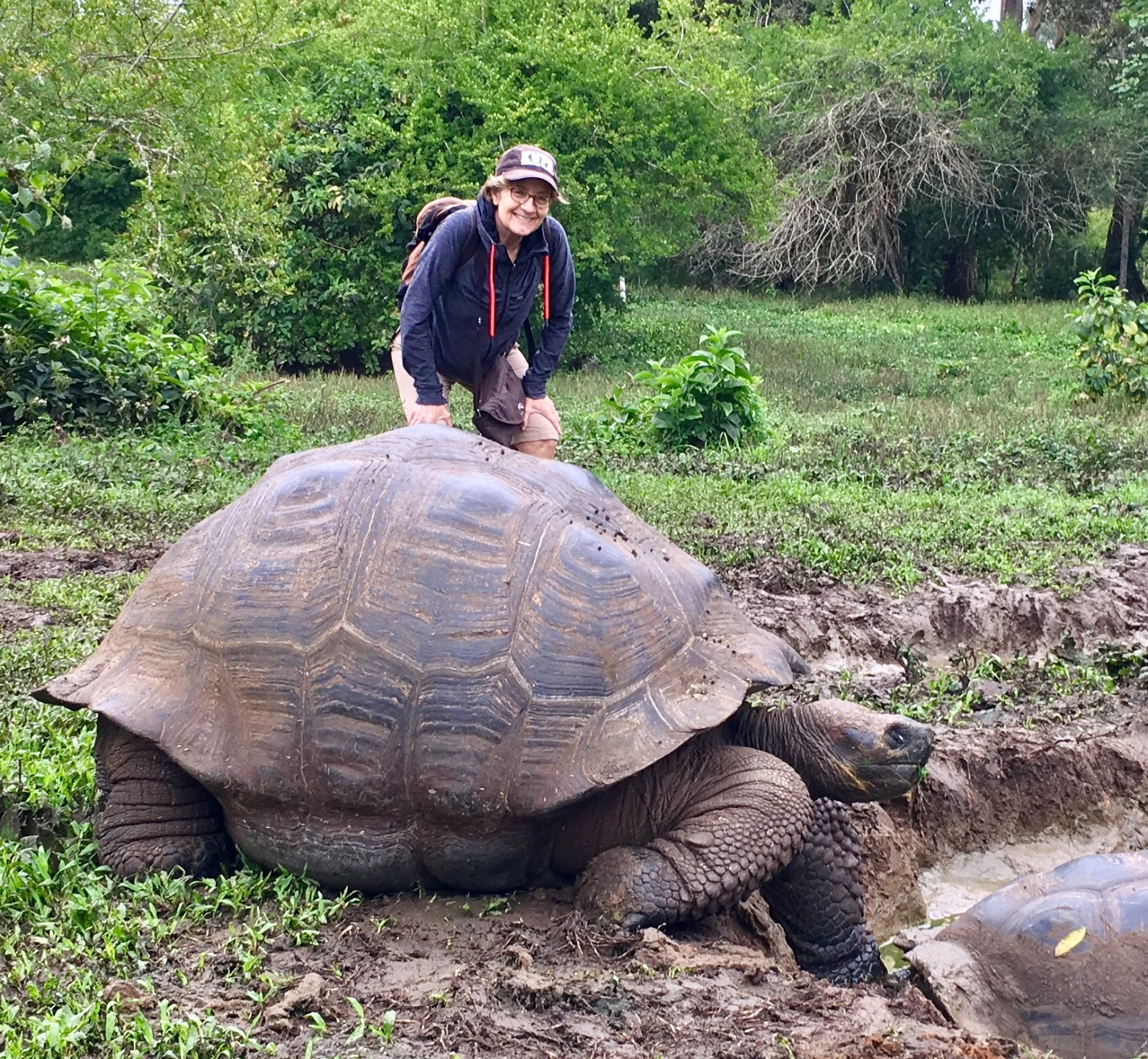 Galapagos tortoise back from the brink | Earth | EarthSky |Galapagos Tortoise