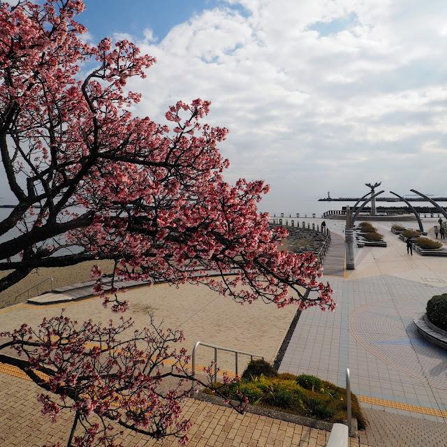 熱海 海岸  親水公園 あたみ桜
