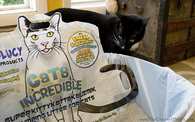 Mr. Kitty Checking out Cats Incredible Cat Litter with Smell Squasher technology
