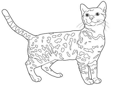 La Chachipedia Dibujos De Gatos Para Colorear Para Imprimir Y Gifs