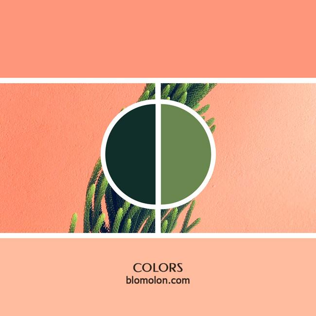 variedad_en_color_color_6