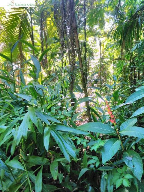 Bosque no Jardim Botânico de Timbó