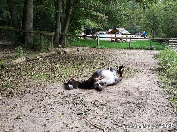 Esel im Wildpark Eekholt in Großenaspe