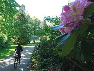 Bürgerpark Braunschweig. Mit Radlerin und blühenden Blüten an einem sonnenreichen Frühlingstag.