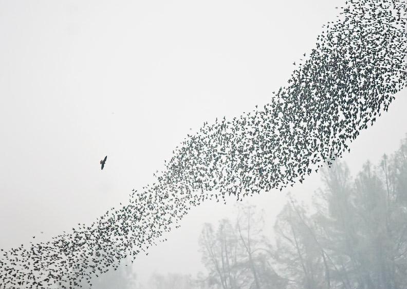 bandada de pájaros · conlosochosentidos.es
