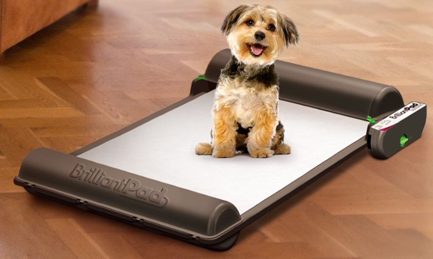 Amazing First in the World Self-Cleaning Indoor Dog Potty