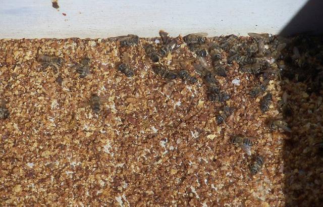 Μια εμπειρία μελισσοκόμου με άσχημη κατάληξη... Ξέχασε κηρηθρα με μέλι δίπλα σε ένα μελίσσι. Δε φαντάζεστε τι ακολούθησε μετά...