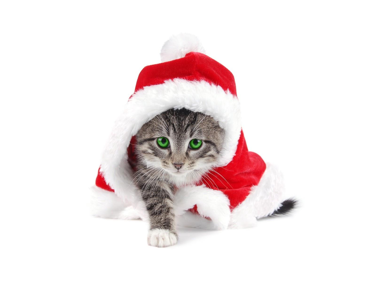 Gatos con gorros de papa Noel - Blog de imágenes