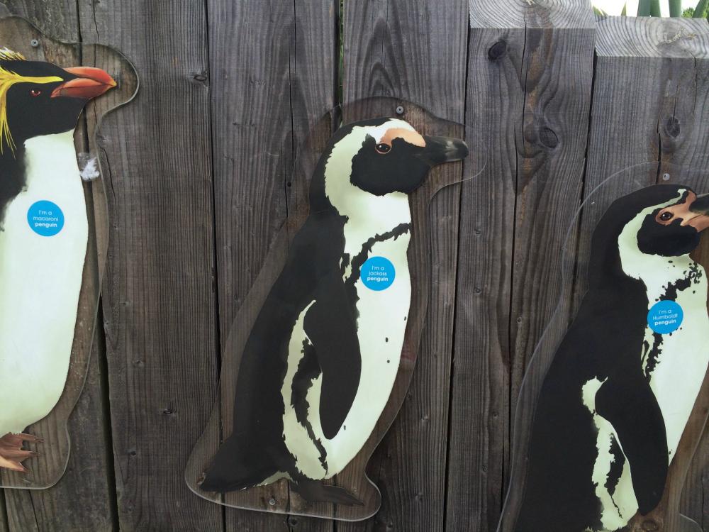 Marwell Zoo Penguins
