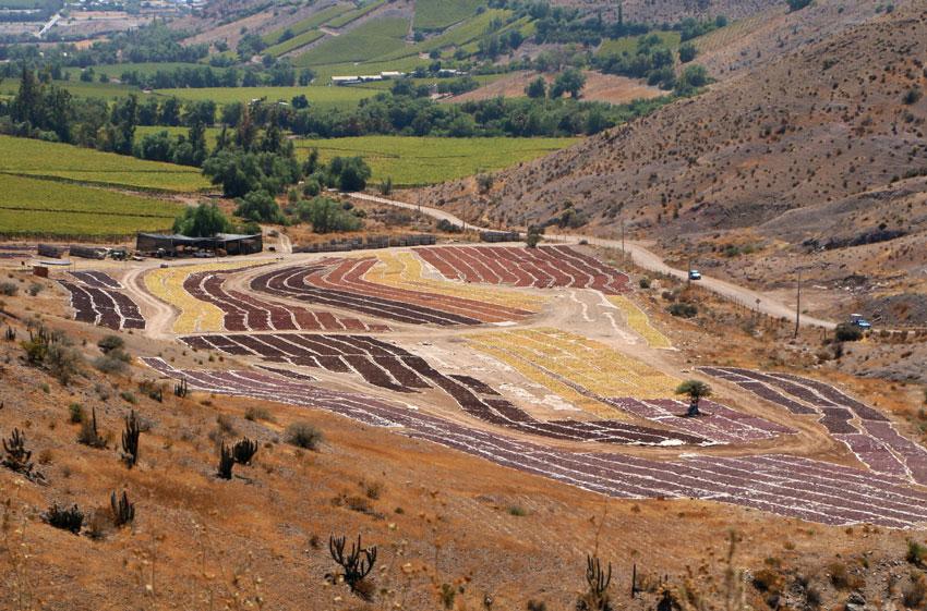 vallee-limari-chili-pisco-vignes