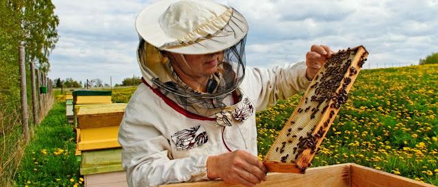 Apicultura y abejas
