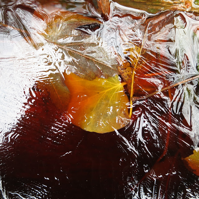 Orange and yellow autumn leaf trapped under ice