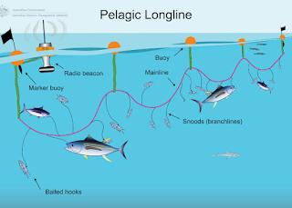 long line tuna